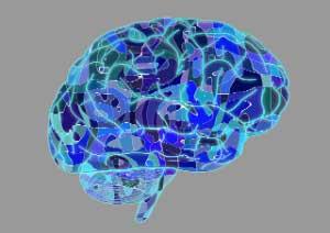 brain_300x212-grey.jpg
