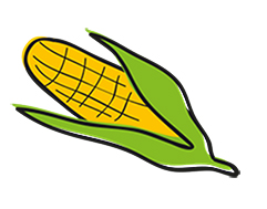 corn%20on%20the%20cob.jpg