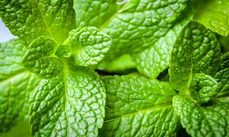 mintleaf465x280.jpg