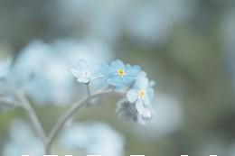 In-memory flower