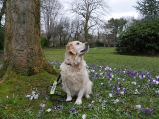 Assistance dog Echo