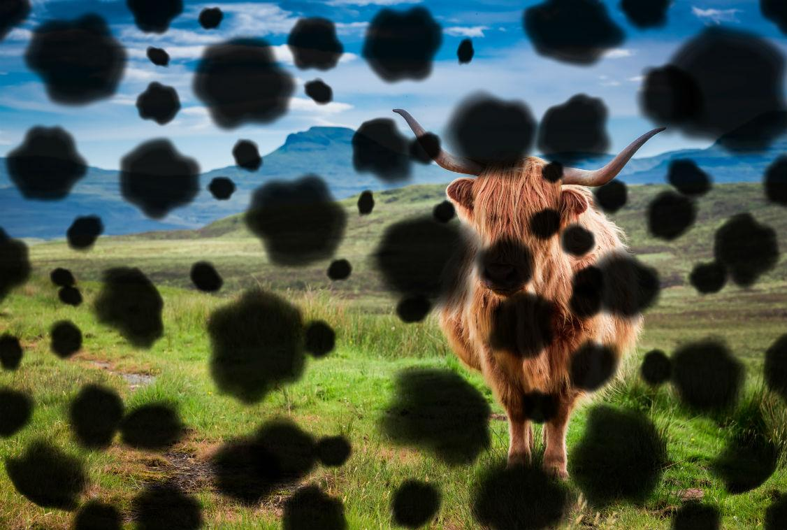 Highland Cow (An image of a Highland cow obscured by the effects of diabetic retinopathy)